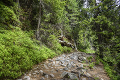 Footpath in mountain green forest. Slovak High Tatras Stock Photo