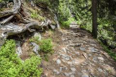 Footpath in mountain green forest. Slovak High Tatras Royalty Free Stock Image