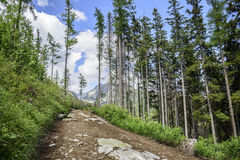 Footpath in mountain green forest. Slovak High Tatras Royalty Free Stock Photo