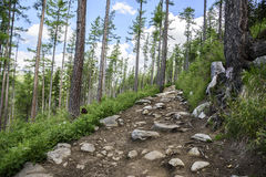 Footpath in mountain green forest. Slovak High Tatras Stock Photography
