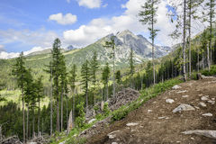 Footpath in mountain green forest. Slovak High Tatras Royalty Free Stock Photos