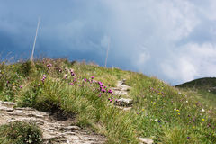 Footpath in the mountains and flowers Royalty Free Stock Photos