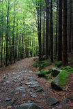 Footpath in Mountan Forest Royalty Free Stock Images