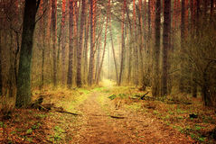Footpath in mystic forest Stock Images