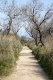 Footpath in National Park of Camargue, Provence Royalty Free Stock Image