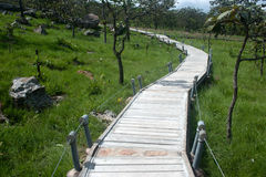Footpath in National park ,Northeast of Thailand. Stock Photos
