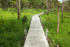 Footpath in National park ,Northeast of Thailand. Royalty Free Stock Photos