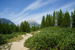Footpath in Grand Teton National Park. A dirt footpath vanishing point in a mountain field or meadow. Pine trees and green grass. Mountains and peaks in the Stock Image