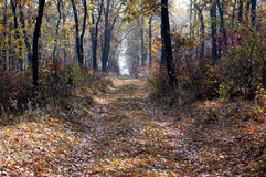 Footpath in the oak wood, morning a gaze, gold leaves, fall Royalty Free Stock Images