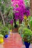 A footpath through one of the garden with flowers and plants stock image