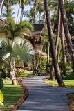 Footpath and palm tree in tropical garden. Island Koh Samui, Thailand Royalty Free Stock Photo