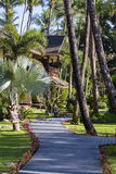 Footpath and palm tree in tropical garden. Island Koh Samui, Thailand Stock Photos