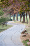Footpath in the park Royalty Free Stock Images