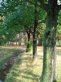 Footpath in a park Stock Image
