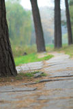 Footpath in park Royalty Free Stock Images