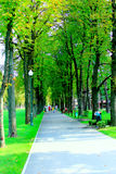 Footpath in the park with big trees Royalty Free Stock Images