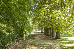 Footpath in Park in England, UK Royalty Free Stock Photo