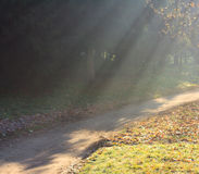 The Footpath in the Park Illuminated by the Sun Royalty Free Stock Image