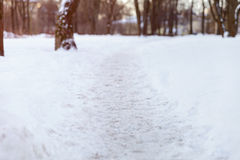 Footpath in park low angle photo Royalty Free Stock Image