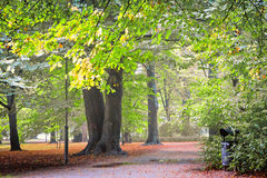 Footpath in park Stock Photo