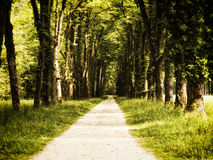 Footpath in a park (2) Royalty Free Stock Photo