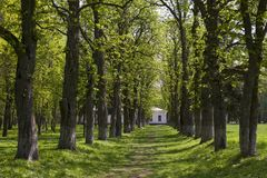 The footpath passes through a green tree tunnel. To the white house Stock Image