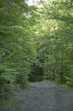 Footpath. The path in the deep forest at summer morning Royalty Free Stock Photos
