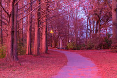 Footpath in Piedmont Park in beautiful twilight glow, Atlanta, USA. The footpath and trunks of hornbeams in the Piedmont Park in beautiful pink glow of twilight Stock Photography