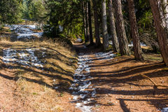 Footpath in pine forest on Dolomites mountains Stock Images