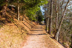Footpath in pine forest on Dolomites mountains Stock Photography