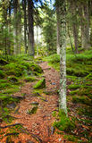 Footpath through a pine forest Stock Photos