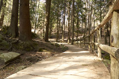 Footpath in the the pine forest source river Lambro Royalty Free Stock Photography