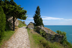 Footpath with pines near the sea. Footpath with pine along rock near the sea Royalty Free Stock Image