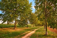 Footpath prowadzenie drzewami wewnątrz zdjęcie royalty free