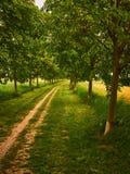 Footpath prowadzenie zielonymi drzewami zdjęcia royalty free