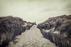 Footpath przez diun Obrazy Royalty Free