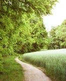 Footpath przez zielonego wiosna krajobrazu z zielonym żyta polem Obrazy Stock