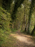 Footpath. Public footpath in forest at autumn UK Stock Images