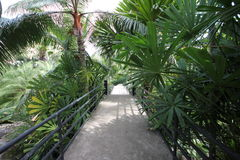 A footpath with a railing in a tropical forest with plant and trees in the Nong Nooch tropical botanic garden near Pattaya city Stock Photo