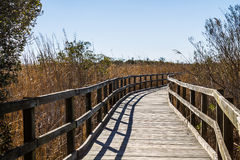 Footpath Through Reeds at Back Bay National Wildlife Refuge Royalty Free Stock Photos