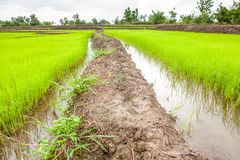 Footpath in the rice fields Stock Images