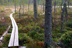 Footpath in scandinavian wilderness Stock Image