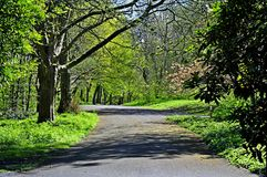 Footpath in Sefton park Liverpool liverpool. Local park in Liverpool u/k Stock Photo