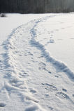 Footpath in snow with footprints Royalty Free Stock Image