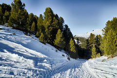 Footpath in snow among pines on Dolomites mountains Stock Photo