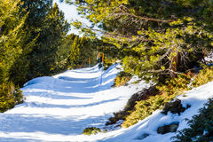 Footpath in snow among pines on Dolomites mountains Stock Image