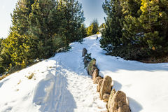 Footpath in snow among pines on Dolomites mountains Royalty Free Stock Images