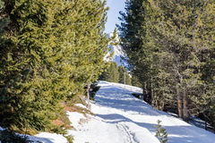 Footpath in snow among pines on Dolomites mountains Royalty Free Stock Photos