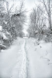 Footpath in snowed forest Stock Images