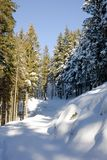 Footpath in a snowy forest. Winter season, vertical orientation Stock Photography